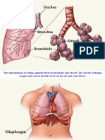 Lung Fuction