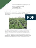 Producción Agropecuaria creció 3,9% en enero-julio del presente año