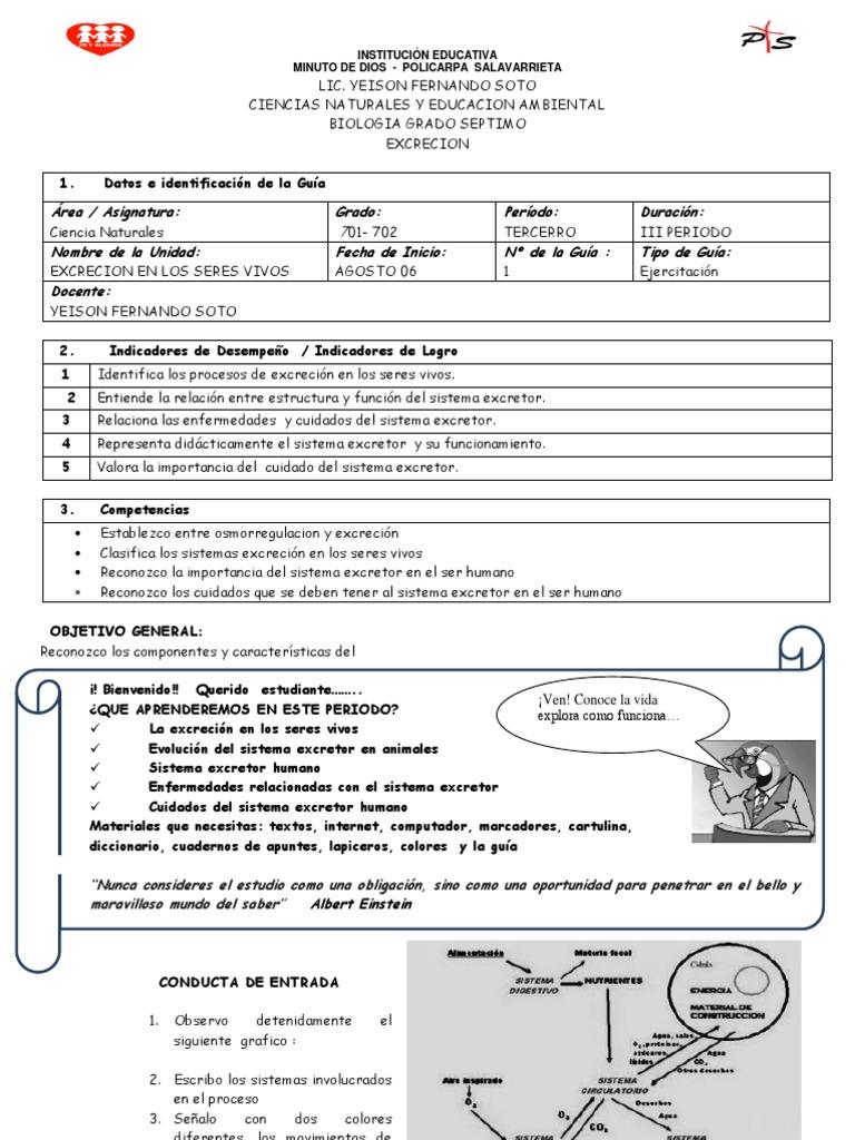 Contemporáneo Sistema Excretor Hoja De Trabajo Imagen - hojas de ...