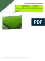 2012WS MET 2-Irrigated - Week 8 (August) Isabela