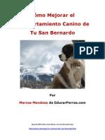 Cómo Mejorar el Comportamiento Canino de tu San Bernardo
