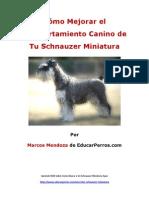 Cómo Mejorar el Comportamiento Canino de tu Schnauzer Miniatura