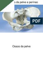 Anatomia da Pelve e Períneo (1)