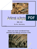 Animal Adaptations PPT[1]