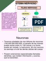 células del-sistema-nervioso y corteza