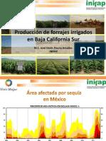 Produccion de Forrajes Irrigados Para Bcs