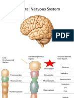 131Central Nervous System