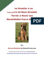 Como Enseñar a un Cachorro de Raza Airedale Terrier a Hacer sus Necesidades Fuera de Casa