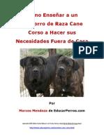 Como Enseñar a un Cachorro de Raza Cane Corso a Hacer sus Necesidades Fuera de Casa