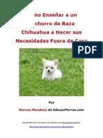 Como Enseñar a un Cachorro de Raza Chihuahua a Hacer sus Necesidades Fuera de Casa