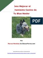 Como Mejorar el Comportamiento Canino de tu Blue Heeler