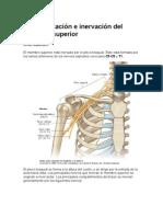 Vascularizacion e Inervacion Del Miembro Superior