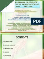 malaria anopheles & spororozoite