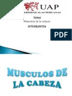 Musculos de La Cabeza 111