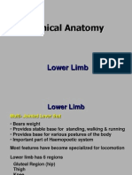 Lower Limb_Clinical Anatomy