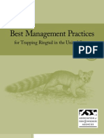 Best Management Practices for Trapping Ringtail