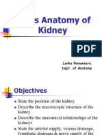 Abdomen & Pelvis_Anatomy of Kidney2004