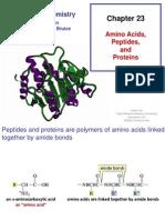 Aminoácidos, petidios e proteinas Ch23MR