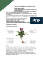 Funciones y Caracteristicas de Los Seres Vivos y Las Plantas