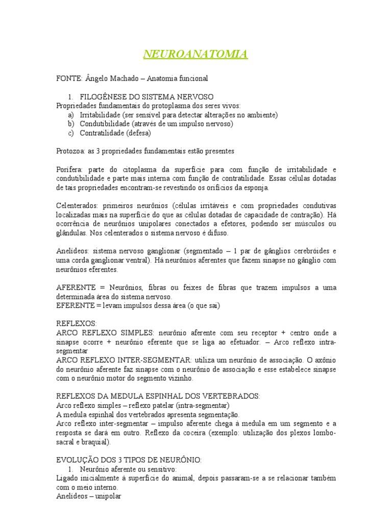 Resumo Angelo Machado - Primeiros Capitulos