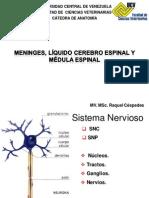 ANATOMIA II Meninges, Fluido Cerebro Espinal 2012