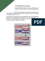 Vgenes Independientes y Genes Ligados