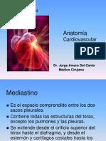 1-Anatomía Cardiovascular 1-2