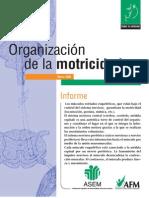 organizacion motricidad