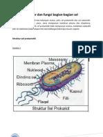 Struktur dan Fungsi Bagian Sel