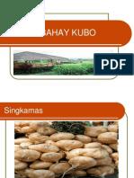 Plants of Bahay Kubo