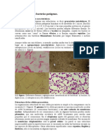 Estructuras de bacterias patógenas
