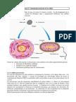 Introduction à la biologie cellulaire 4