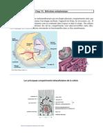 Introduction à la biologie cellulaire 6ET7