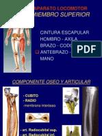 4- ANTEBRAZO Y MUÑECA