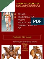 7 Pelvis Reg.glutea