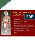 9 Rodilla Pierna