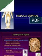 15- Medula Espinal