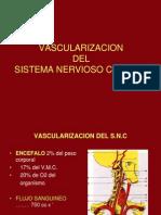 19- Vascularizacion An