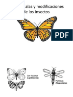 Las Alas de Los Insectos