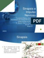 Presentación Sinapsis e Impulso Nervioso