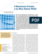 Blue Native PAGE Metodo
