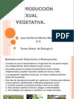 Reproducción Asexual  Vegetativa