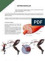 Contenido de Sistema Muscular