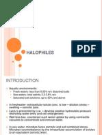 Halophiles
