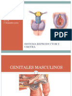 Organos Genital Es