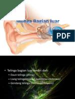 Biologi-Telinga Bag Luar