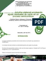 Cultivo de Spirulina Platensis