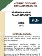 Anatomia Animal