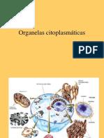20070621021721_Citologia