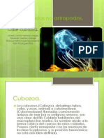 Cubozoa